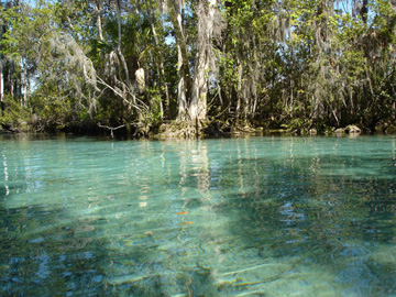 Three Sisters Spring, Kings Bay, Crystal River
